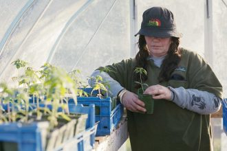 woman with pigtails gazes at a pot of medicinal cannabis